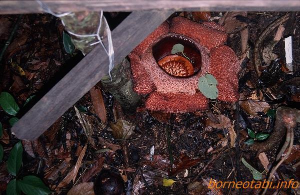 2002年5月 花とつぼみ