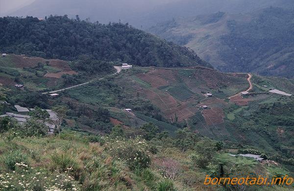 2002年5月 急な斜面に広がる野菜畑