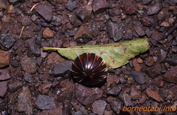 ピンミリピ 1998年12月 ダナンバレー