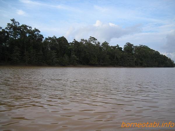 2005年2月キナバタンガン川を上る