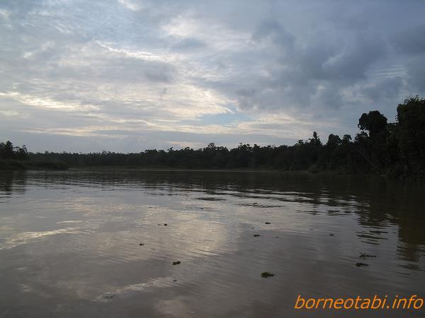 2005年2月 キナバタンガン川を上る 両側マングローブ