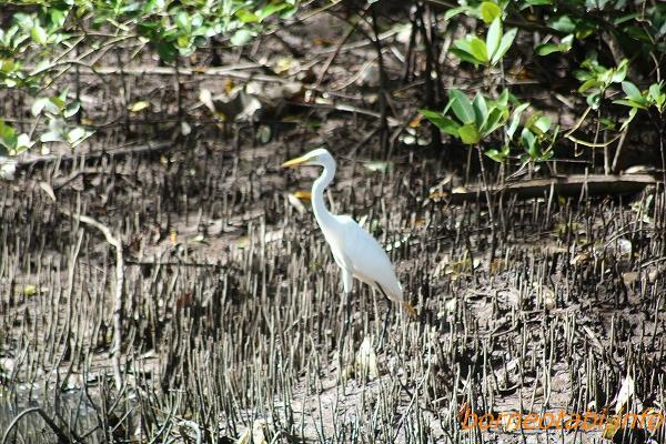 2013年1月13日 Kota Kinabalu Wet land Centre