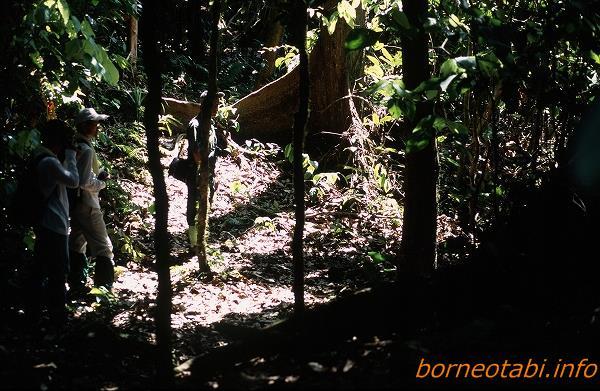 2002年5月 ダナンバレー ゾウの糞を観察するガイドと同行者。