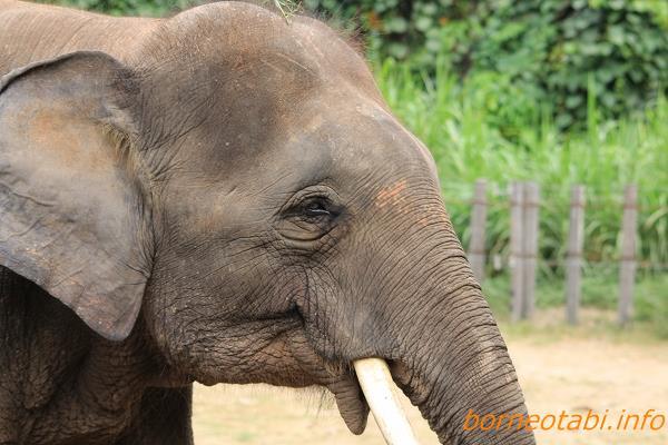 2012.6.29 ロッカウィ動物園