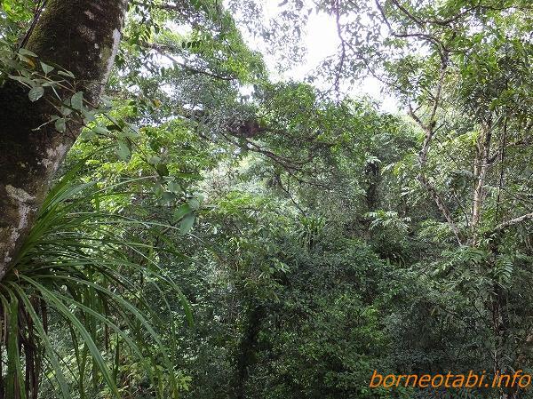 キオビヒメワモンのいるジャングル 2014年2月13日
