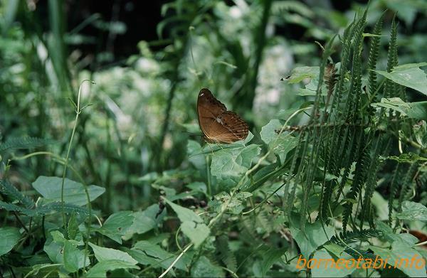 エマレアミナミヒョウモン 2002年5月 ダナンバレー