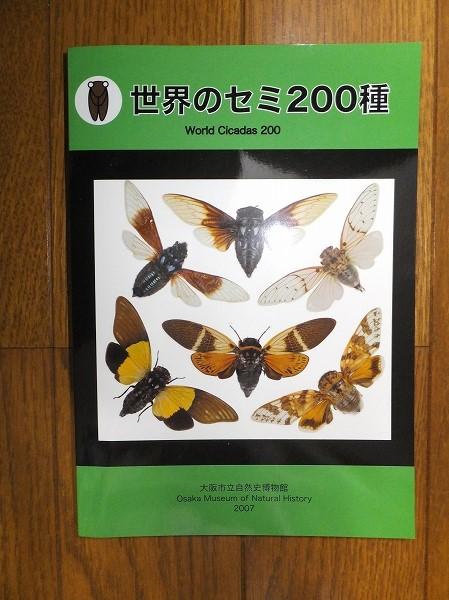 世界のセミ200種 大阪市立自然史博物館2007 2014.5.14撮影