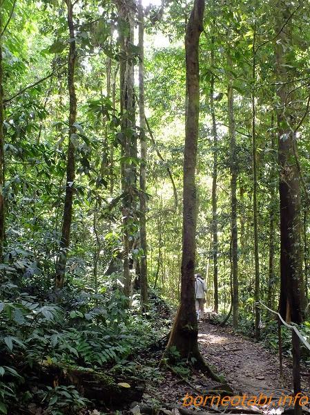ジャングルの歩道 2012.7.1 ダナンバレー
