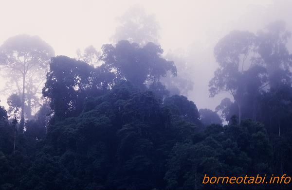 霧の朝 1998年12月ダナンバレー