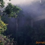 初めてのボルネオ その6 ダナンバレーの森