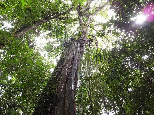 ムルの森の植物