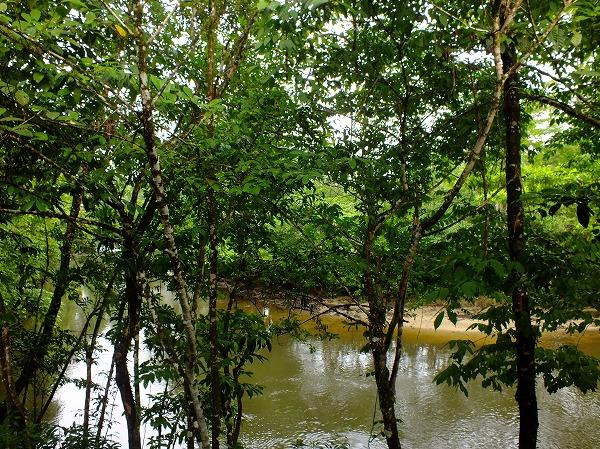 食堂のすぐ横の川、ムル