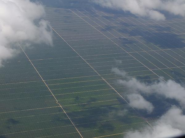 オイルパーム(油やし)の畑が広がります。