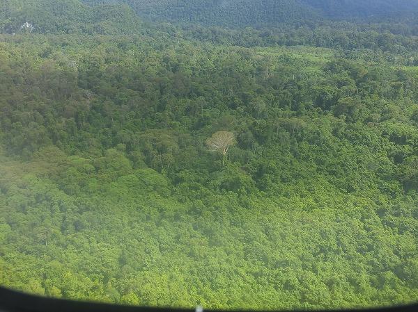 ムル国立公園近くの熱帯雨林
