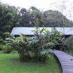 バンガロー ムル国立公園