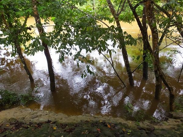 雨で増水した川、2014年