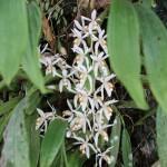 ムル国立公園で見かけた花