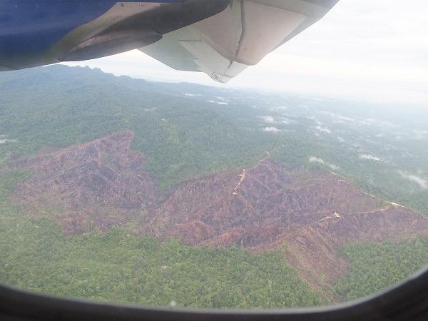 赤茶けた部分は森が切られたところ。