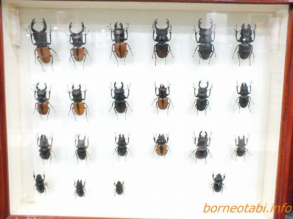 たくさんの昆虫標本がある キパンディバタフライパーク 2012.5.23