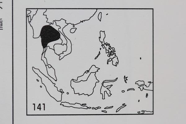 ヒメテイオウゼミ分布図 「世界のセミ200種」より