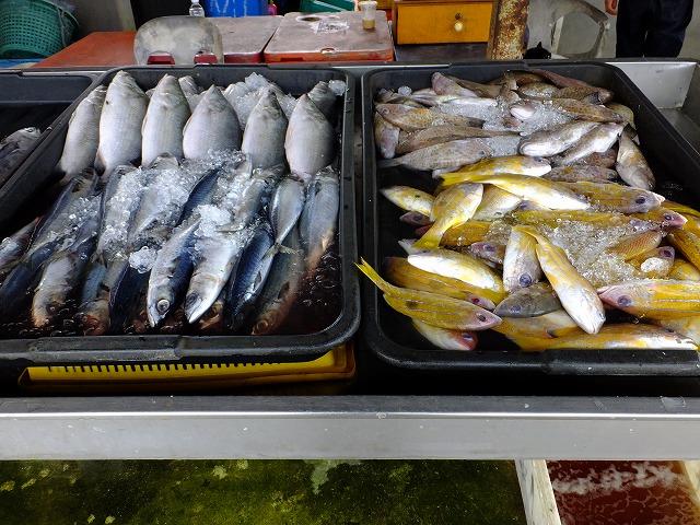 お魚1 サバ、ベラ?