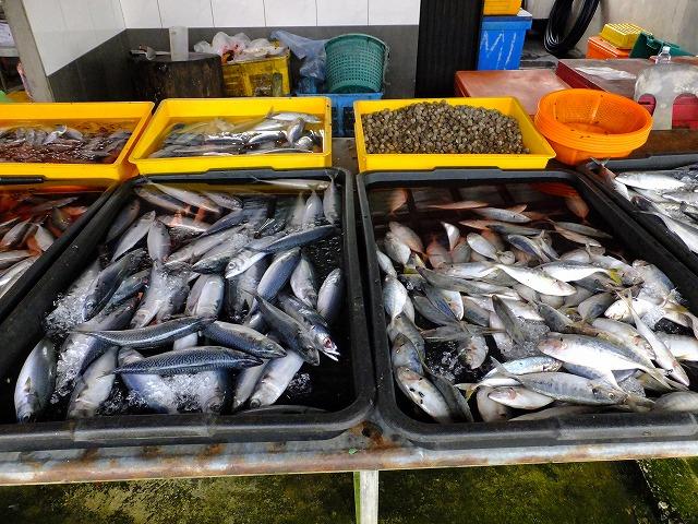 お魚3 サバとアジ?