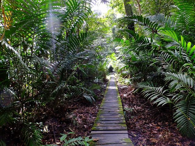 バコ国立公園のジャングル