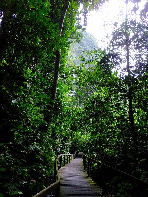 グヌンムル国立公園内の木道
